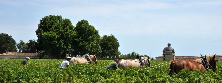 Initiation à la Traction équine en viticulture